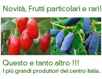 Vendita online piante da frutto frutti antichi rari for Vivai piante da frutto vendita online