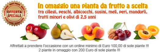 Vendita piante da frutto online frutti antichi rari for Alberi frutta vendita