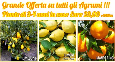 Vendita online piante da frutto frutti antichi rari for Piante da frutto online