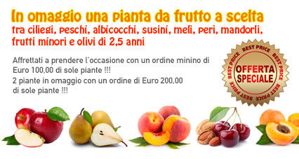 Vendita piante da frutto chi siamo for Acquistare piante di agrumi