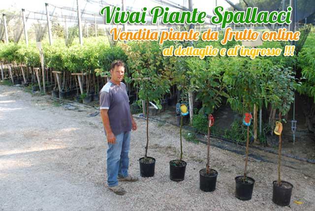 vendita piante da frutto frutti antichi vivai spallacci