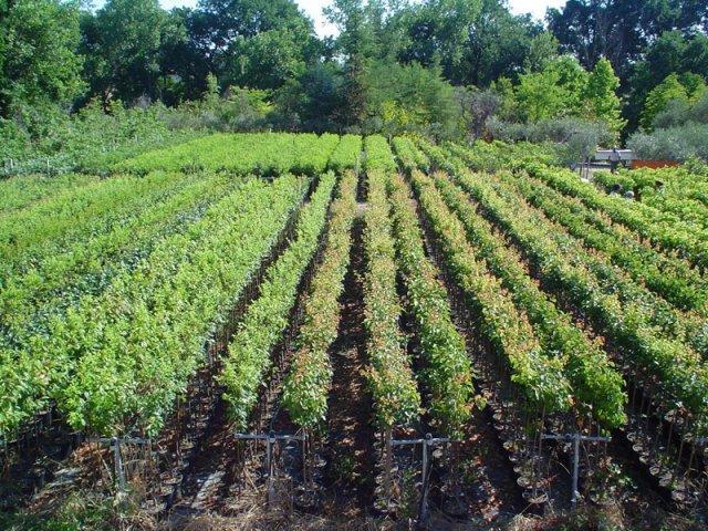 Vendita piante da frutto foto for Piante da frutto online
