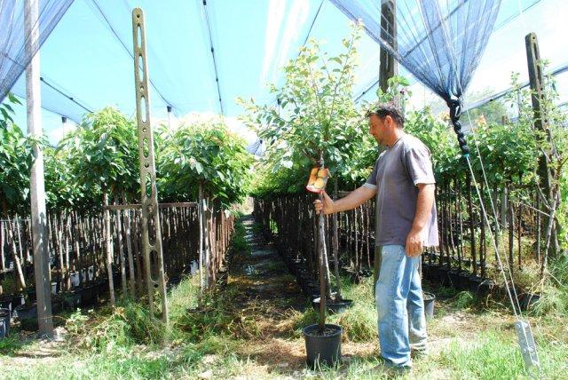 Vendita piante da frutto foto for Piante da frutto vendita on line
