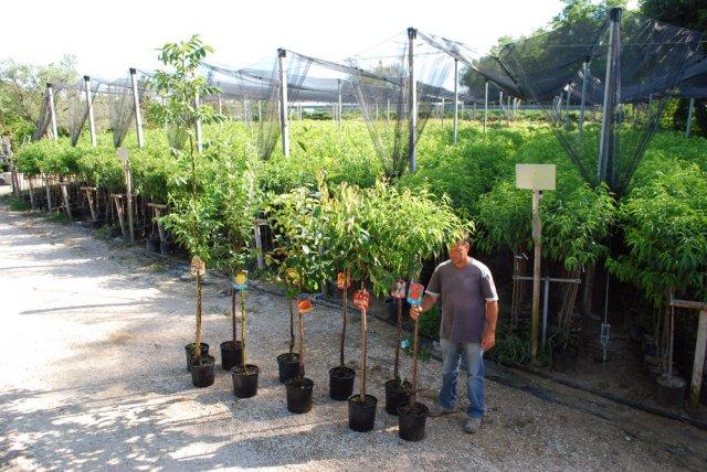 Vendita piante da frutto foto for Piante da vivaio