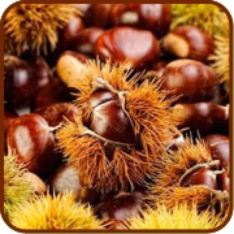 Vendita online alberi da frutto frutti antichi rari e for Comprare piante da frutto online