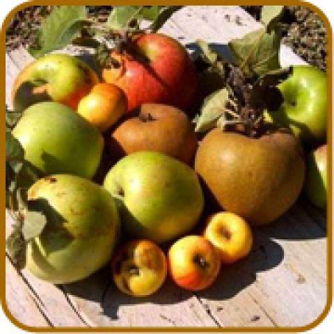 vendita online alberi da frutto frutti antichi rari e