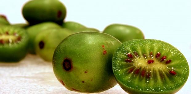 Kiwi kiwi senza pelo missionario chiandetti for Nergi piante vendita