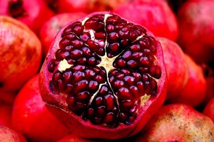 Vivaio Rosso Melograno : Arbusto di melograno nano immagini arbusto di melograno nano
