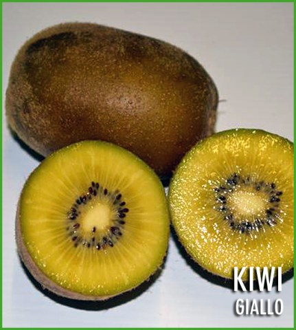 vendita piante di kiwi giallo arguta hayward