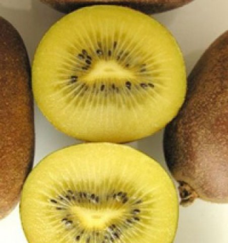 Vendita pianta di kiwi Golden Delight