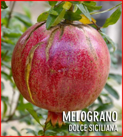 Melograno_Dolce__54184dc9686b3.jpg