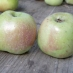 Mela conventina - frutto antico
