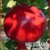 Melograno Wonderful alberello