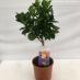 Clementino vaso 20