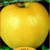 Melo Golden Delicious B
