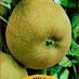 mela ruggine del piemonte